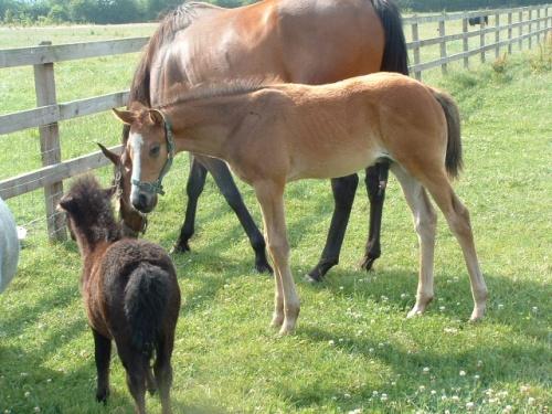 Tutti Frutti, Lilo's first foal, with his miniature friend Lurgy