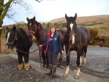 Baldrick a 26 year old cob, then Kyle ID x tb 33 years old and Mirren, a 6 year old warmblood x tb